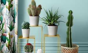 Комнатные растения, которые обладают незримой силой и влияют на многие сферы жизни