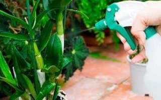 Можно ли и как опрыскивать орхидею и её цветки водой в домашних условиях, как часто и правильно надо это делать?