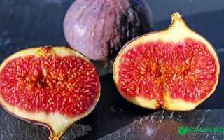 Растение инжир (смоковница): фото и описание, условия выращивания, посадка, уход за инжиром