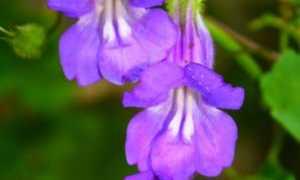 Цветоводство: выращивание растений из семян на рассаду и в открытом грунте