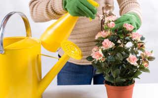 Комнатные цветы: как правильно ухаживать