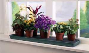 Когда лучше садить комнатные цветы