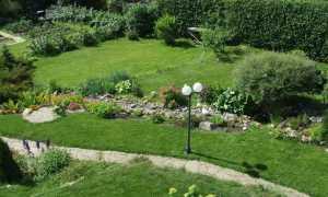 Живая изгородь из боярышника: сорта, посадка