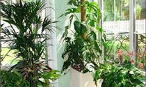 Доклад на тему домашнее растение
