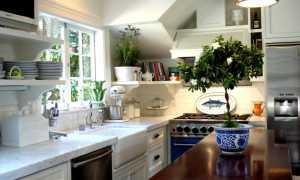 15 домашних растений, которые стоит держать на кухне