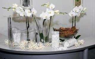 Какой нужен уход за орхидеями в стеклянных вазах?