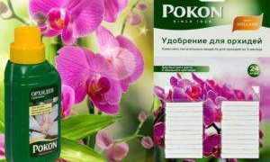 Удобрение Pokon для орхидей: инструкция, состав, свойства