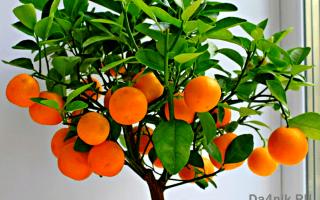 Комнатные плодовые растения с фото и названиями