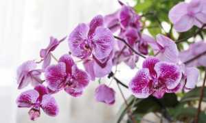 Всё самое интересное об орхидее для детей: описание, загадки, факты