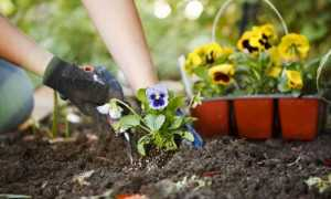 Низкорослые цветы для клумбы: названия и характеристика растений