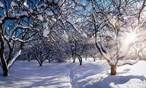 Как защитить деревья от солнечных ожогов весной
