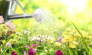 К чему снится поливать комнатные цветы