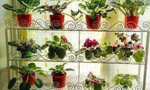 Подставки для фиалок на подоконнике своими руками: фото кованных полочек и стоек для цветов на окне