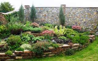 Растения и цветы-многолетники для альпийской горки