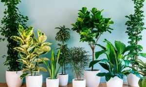 5 полезных растений, которые очистят воздух в комнате ребенка