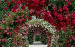 Вьющиеся растения для сада: названия и описание (+ фото)