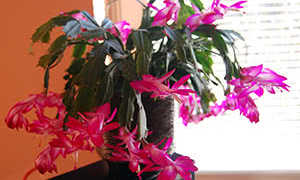 Комнатные цветы зимой уход