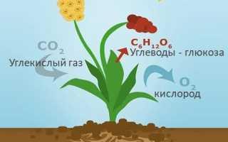 Главные правила удобрения растений