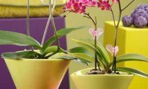 Насколько важно посадить орхидею в прозрачную посуду