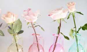 Розы в вазе дома