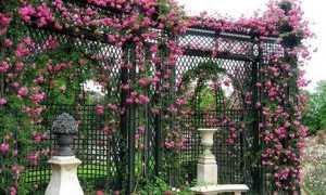 Шпалера для плетистой розы своими руками