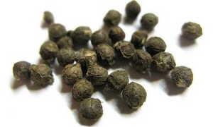 Базелла: фото, описание лианы, выращивание, посадка, уход за растением