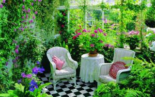 Комнатные растения и их скрытый смысл для человека