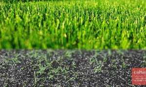 Как и когда сеять газонную траву