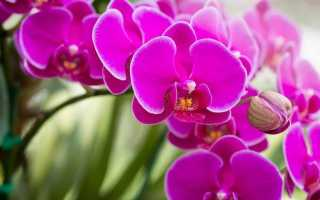 Сколько живут орхидеи в домашних условиях: сроки