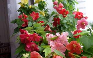 Комнатные растения, цветущие круглый год