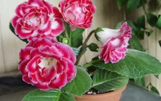 Самые благоприятные дни для пересадки комнатных растений в мае 2020
