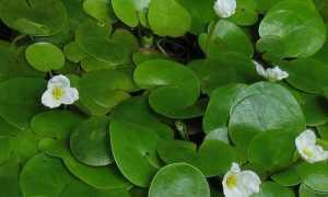 Вода – жизненная необходимость для растений