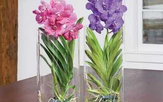 Теплица для орхидеи дома