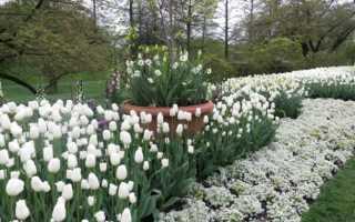 Многолетники с белыми цветами: фото и названия, для клумбы, цветника, сада