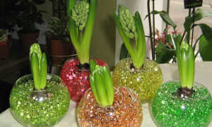 Использование гидрогеля для комнатных и садовых растений