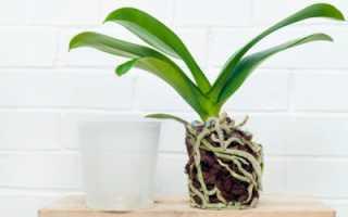 Грунт и субстрат для орхидей готовим своими руками в домашних условиях