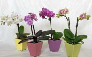 Мини орхидеи – разнообразие сортов