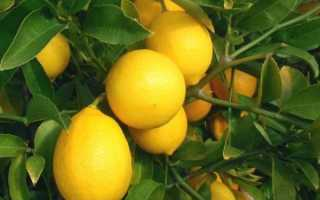 Подкормка комнатного лимона в домашних условиях: чем подкормить, удобрения