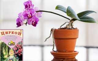 Применение эпина и циркона для орхидей