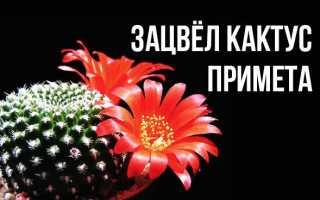 Когда цветет кактус приметы