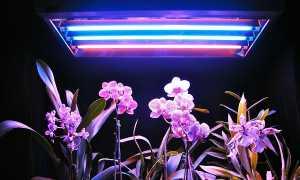 Правильный выбор фитоламп для орхидей