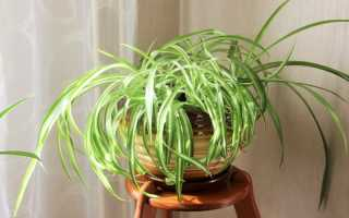 Какие комнатные растения можно посадить в один горшок?