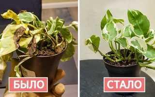 Проверенный способ: как вернуть жизнь погибающему растению