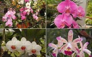 Символизм орхидеи в разных культурах