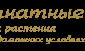 Фиалка ЯН-Каприз (Н. Пуминова): фото и описание сорта