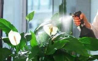Правильные температурные режимы для цветов