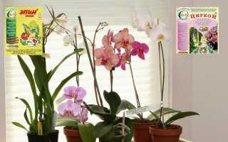 Что нужно знать о применении «Эпина» для орхидей