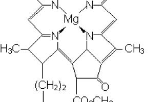 Световая фаза фотосинтеза (кратко и понятно) — процессы происходящие в световую стадию и схема, что является результатом