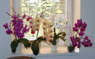 Почему у орхидеи трескаются и лопаются листья – причины и решение проблемы