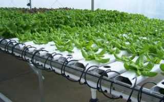 Гидрогель – инструкция и технологии выращивания домашних растений